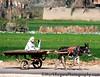 Donkey Cart<br /> Memphis, Egypt