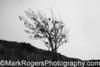 Eucalyptus Tree on Mount Davidson<br /> San Francisco, California