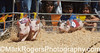 County Fair Pig Race<br /> San Mateo, California