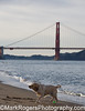 Shaking it off at dog-friendly Crissy Field<br /> San Francisco
