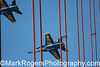 Blue Angels over the Golden Gate<br /> Fleet Week<br /> San Francisco