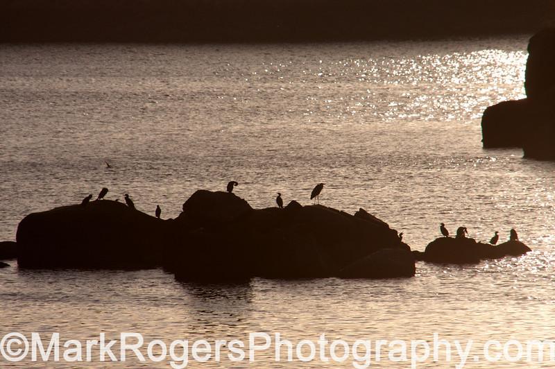 Herons roosting near Aswan