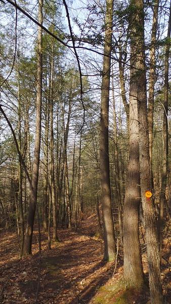 Minisink Trail, Deerpark, NY - 4/13/15.