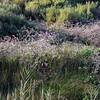 Canal_du_Midi-44 9-15-11
