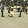 OK State Fair 9-14-12 (45)