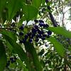 Hike to Manoa Falls, from Lyon Arboretum in Honolulu.