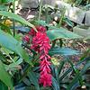 Flowers in the backyard.