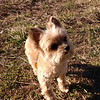 Tiny doggie at Bonticou Craig.