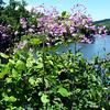 Bridge of Flowers in Shelburne Falls, Mass. (6/15/14)