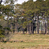 Chincoteague10 5-3-11