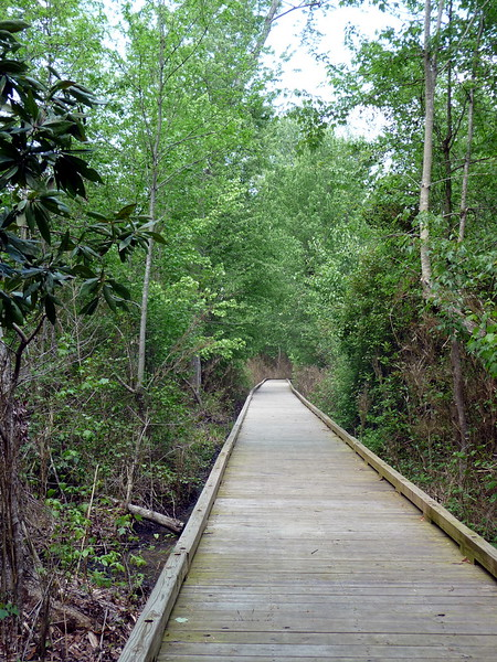 Dismal_Swamp_Canal24 4-25-11