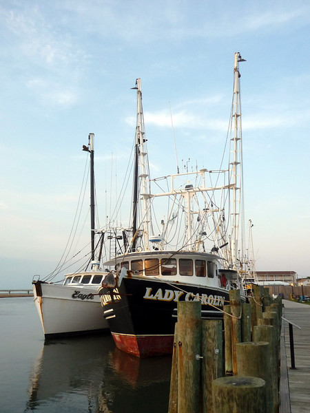 Chincoteague1 5-2-11