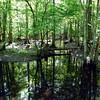 Dismal_Swamp1 5-2-11