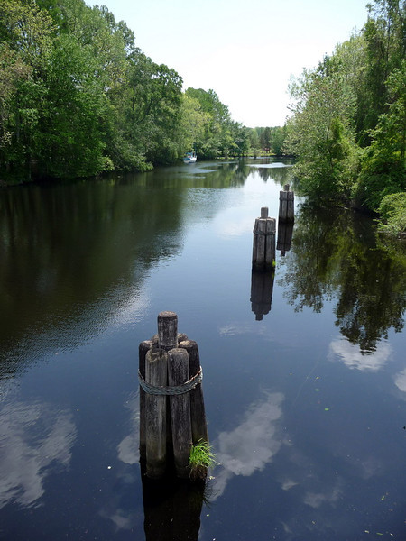 Dismal_Swamp_Canal16 4-25-11