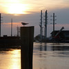 Chincoteague3 5-2-11