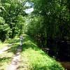 Dismal_Swamp2 5-2-11