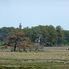 Chincoteague42 5-3-11
