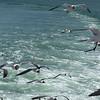 Hatteras_ferry6 4-27-11