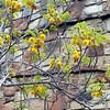 Austin_wild_flower_garden-06 3-27-12