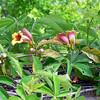 Austin_wild_flower_garden-05 3-27-12