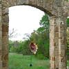 Austin_wild_flower_garden-28 3-27-12