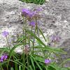 Austin_wild_flower_garden-03 3-27-12