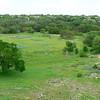 Austin_wild_flower_garden-04 3-27-12