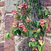 Austin_wild_flower_garden-01 3-27-12