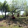 Arbuckle_Wilderness- 03 3-29-12