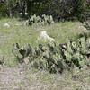 Guadalupe_SP-02 3-26-12