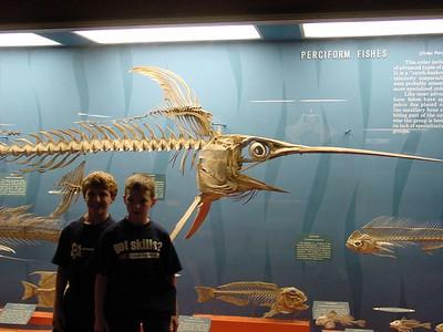 Sword Fish fossil