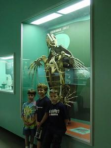 Sea Turtle fossil