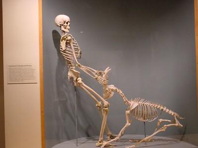 Proof positive that prehistoric man inhabbited Louisiana