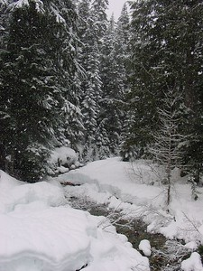 Back Country Stream 2