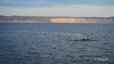 Fin Whale Path