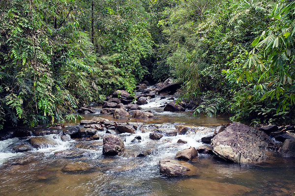 A Small River in the Jungles of South Sri Lanka near to Sinharaja Forest Reserve