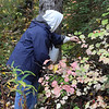 My Mom the berry picker!