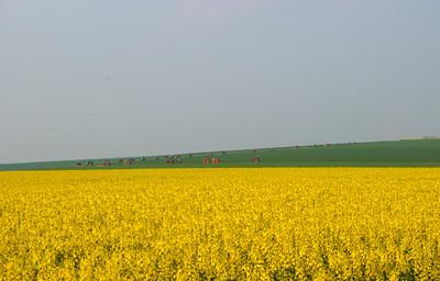 Defile de tracteurs dans les champs