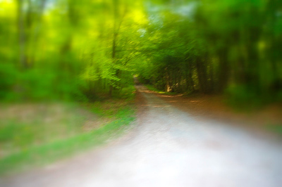 Chemin de foret