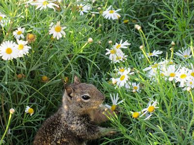Eating flowers