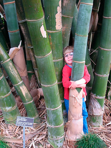 Julian & giant bamboo