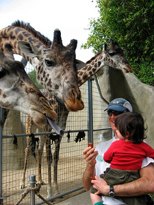 Dave & Fionn feeding the giraffes