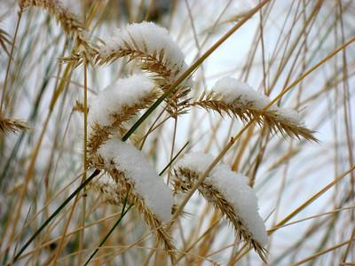 Snowstorm in Nederland (Oct 2007)