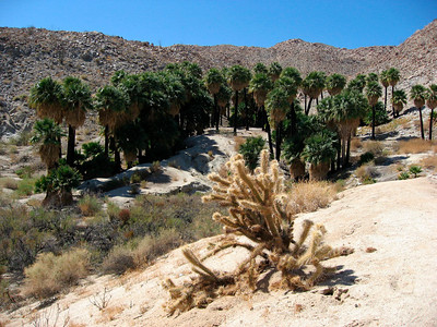 Southwest Grove (Mountain Palm Springs)