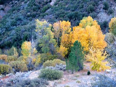Pine Mountain (Nov 2014)