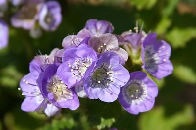 14 flowers