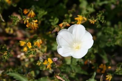 08 wildflower