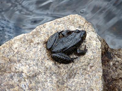 Frog at Wanda Lake: 11426ft