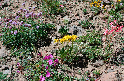 Sonora Pass (Eastern Sierra), 09/2006