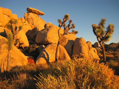 Joshua Tree  (Oct 2011)